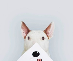 dog, funny, and bull terrier image