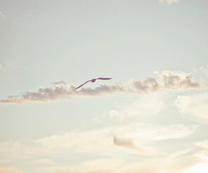 sky, bird, and photography image