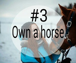 3, horse, and bucket list image