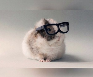 cute, adorable, and glasses image