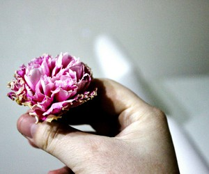 flowers, photography, and love image