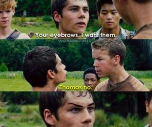 thomas, the maze runner, and gally image