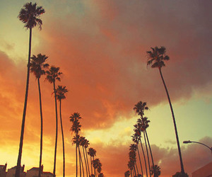 palms, photography, and sun image