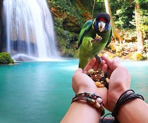 nature, animal, and parrot image