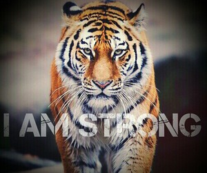 motivation, tiger, and wild image