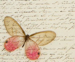 butterfly, french, and handwriting image