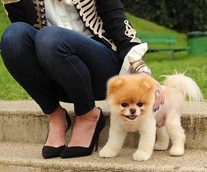 cute, boo, and dog image
