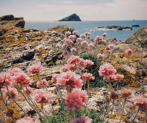 cliff, flowers, and sea image