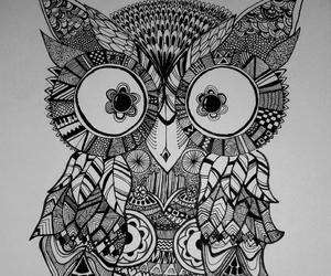 owl and beautiful image