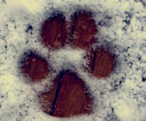 chihuahua, dog, and paw image