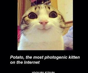 cat, cute, and potato image