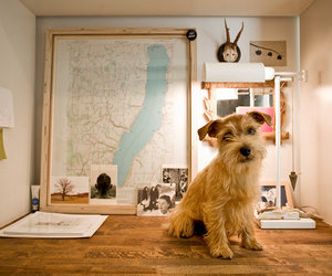 dog and map image