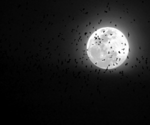 bat, black and white, and moon image