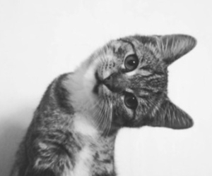 kitten, black and white, and cute image