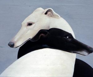 dog, art, and greyhound image