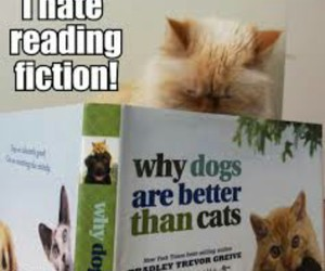 better, fiction, and cats image