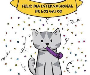 birthday, cats, and Gatos image