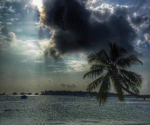 amazing, cool, and palms image