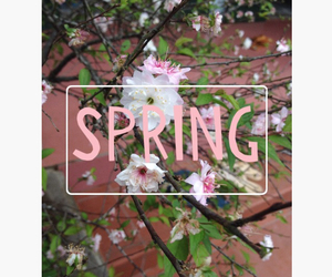 photo, pink, and spring image