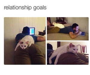 cat, Relationship, and funny image
