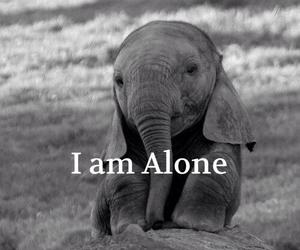 alone, elephant, and sad image