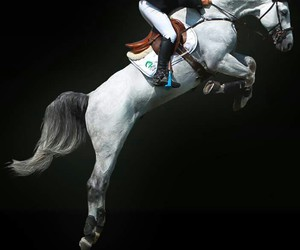 equestrian, horse, and international image