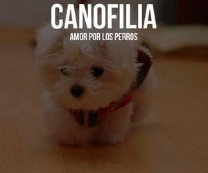 dog and canofilia image