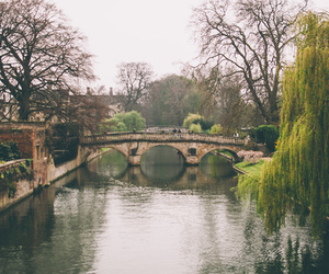 bridge, nature, and trees image