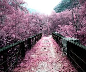 pink, flowers, and bridge image