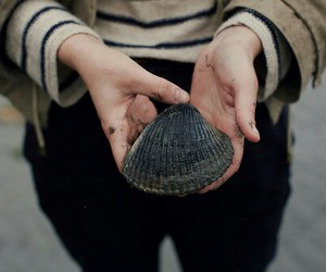 beach, shell, and tumblr image