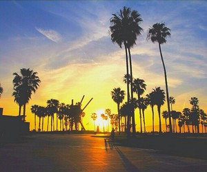 america, palm, and summer image