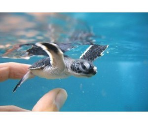 turtle and cute image