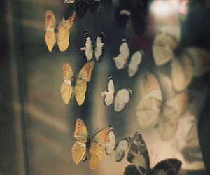 butterfly, beautiful, and insects image