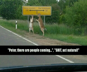 funny, deer, and germany image