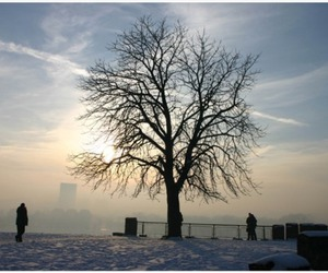 beautiful, Belgrade, and cold image