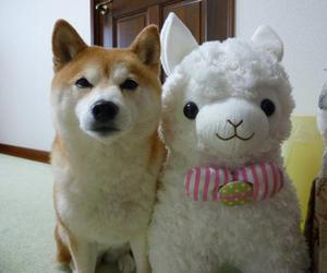 cute, dog, and kawaii image