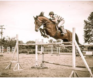 equestrian, Flying, and horse image