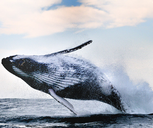 whale, ocean, and blue image