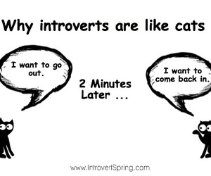 introvert and cats image
