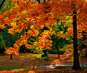 fall, nature, and forrest image