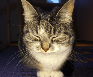 animal, cat, and dark image