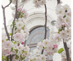 cherry blossom, travel, and white image