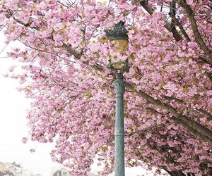 pink, paris, and tree image
