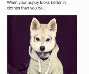 puppy, funny, and dog image
