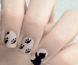 cat and nails image