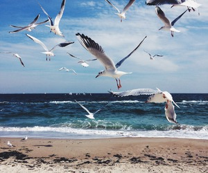 ocean, beach, and bird image