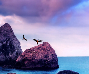 bird, wallpaper, and nature image