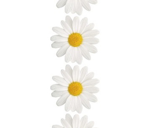 background, wallpaper, and daisy chain image