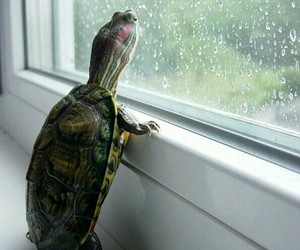 turtle, animal, and rain image