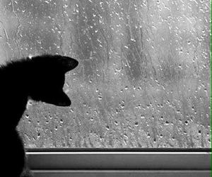 cat, rain, and window image